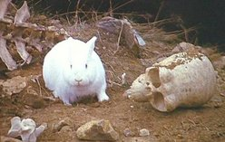 The killer rabbit.